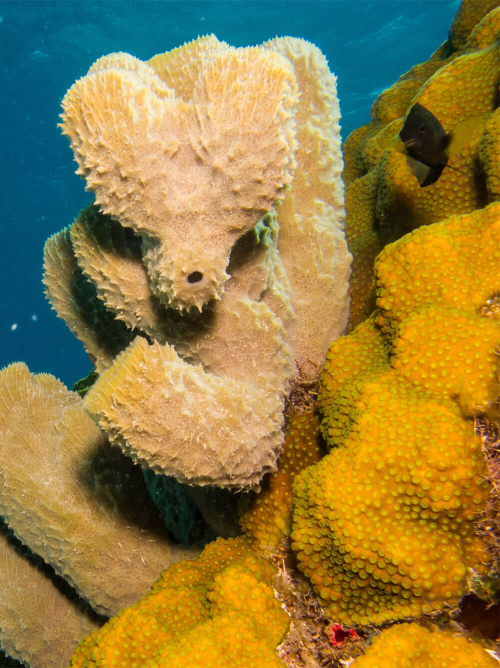 God's Creative Power Behind the Brainless Genius of the Sponge Article Image
