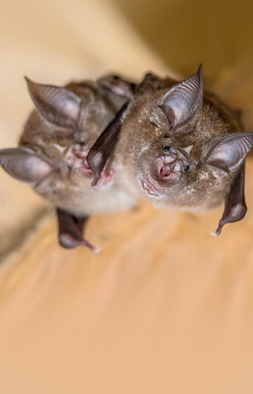 Bats looking down