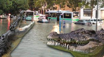 flooding in Queensland and salt-water crocodiles