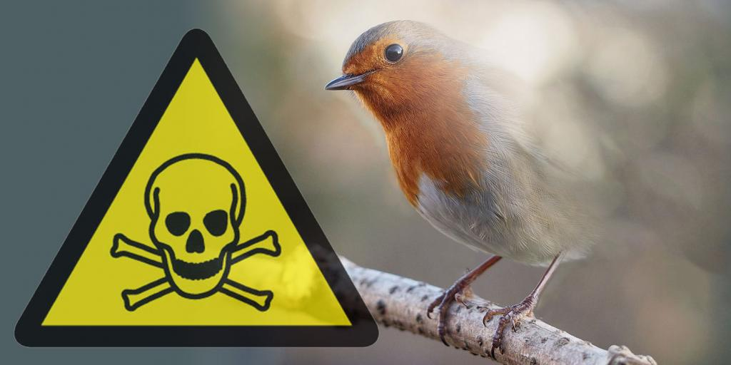 A poison sign and a disappearing European Robin