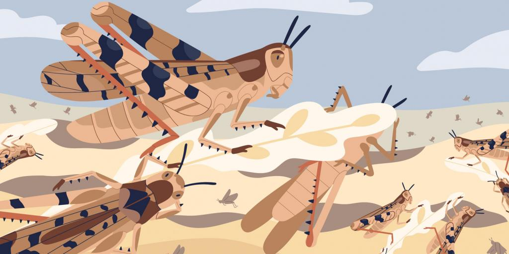 More Locusts for East Africa?   Tomorrow's World