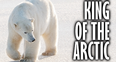 Oh Canada | King of the Arctic