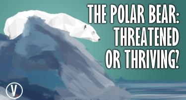 Tomorrow's World Viewpoint | The Polar Bear: Threatened or Thriving?
