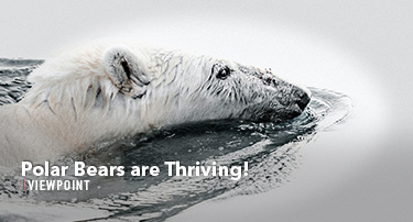 Tomorrow's World Viewpoint | Polar Bears are Thriving!