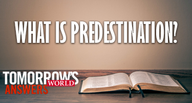 Tomorrow's World Answers | What is Predestination?